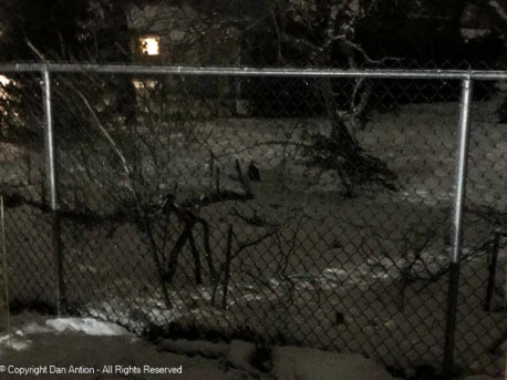 I hope Rivergirl can make out the bunny. Almost dead center, next to the angled branch.
