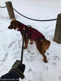 Maddie is surveying her park.