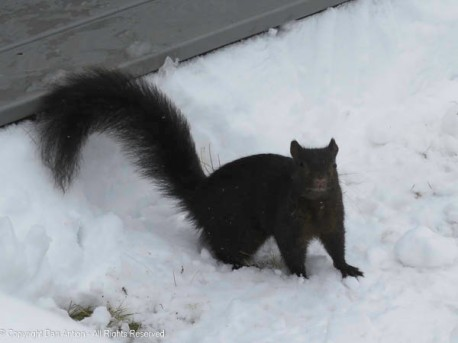 """""""I hope you brought peanuts, because I have to dig a long way to get to the ground."""""""