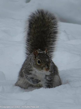 """""""You need to aim better. I don't want to have to keep digging for those peanuts."""""""