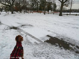 Maddie is surveying her park. Yes, Maddie, it's a mess.