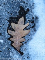 I liked the way this leaf is making its way through the ice.