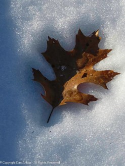 The leaves are melting into the snow.