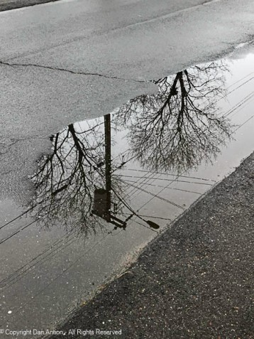 We tried to sneak our walk in between showers. This was the puddle at the end of our driveway. Not a good sign.