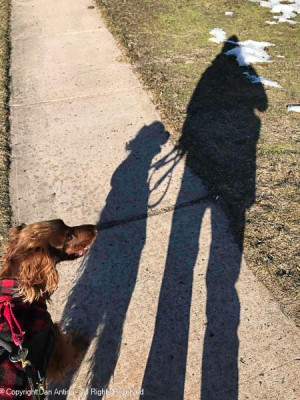 In a few days, it's supposed to be thirty degrees warmer, but we still got out for a walk on the weekend.