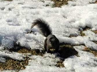 """Smokey hopped over the snow to say hi. Well, hi and """"do you have any peanuts?"""""""
