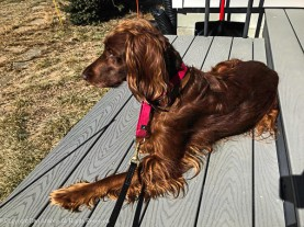 It's been cold this weekend, but the decking gets warm. Maddie likes to sit for a little while.