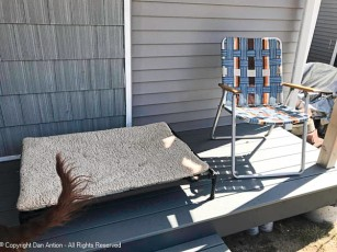 """""""Maddie, you don't like sitting in the sun. Just get up on your cot."""""""