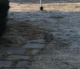Bunny, munching in the morning.