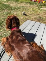 Maddie wanted to sit in the sun for a while.