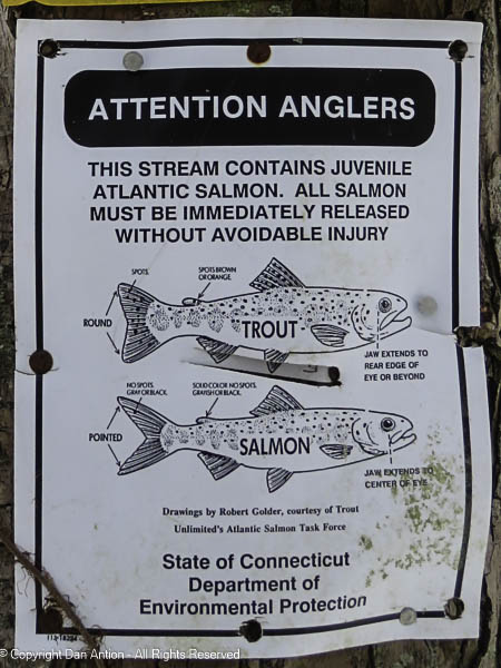 In case you came here to fish.