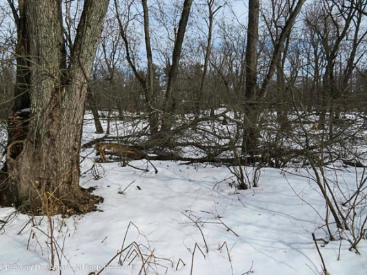 The forest suffered during recent wind storms.