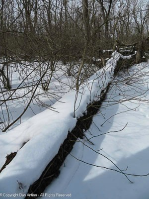A downed tree. Nature is allowed to take its course here.