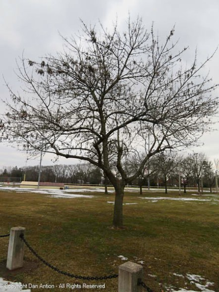 The trees are starting to bud out.