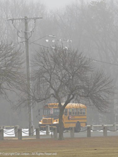 The buses hang out in the park until it's time to begin their run,