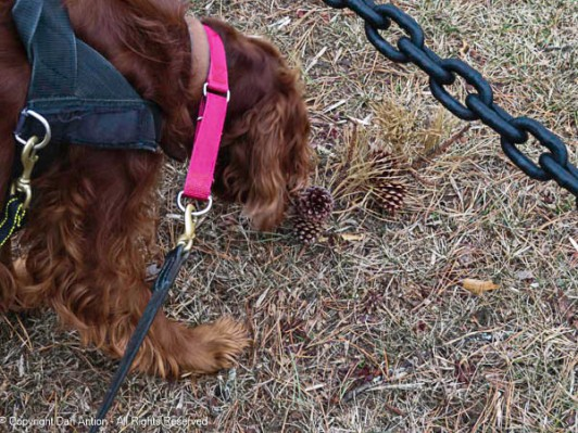 Maddie is fascinated with the pine cones.