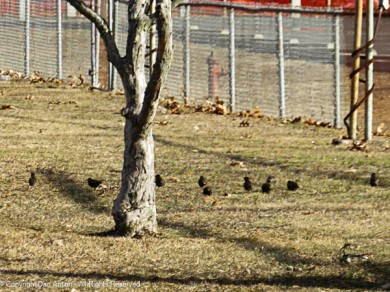 """""""The field is dry, I hear the crows are up for some spring training."""""""