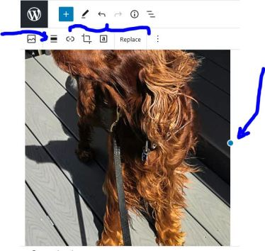 """All of these controls on the lower menu are image control options. The blue dot """"handles"""" will let you resize the image."""