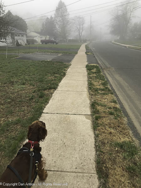 """""""What do you think, Maddie. You us for a walk in the fog?"""""""