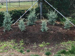 """These are fast-growing, drought-tolerant and the company says they """"thrive on neglect"""" which sits us :-)"""