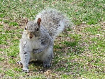 """This is the way most of the squirrels stand when they are """"requesting"""" a treat."""