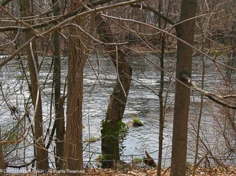 The Farmington River through the trees.