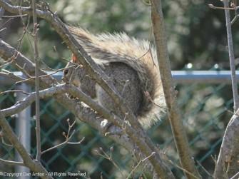 Munching in the dogwood tree.