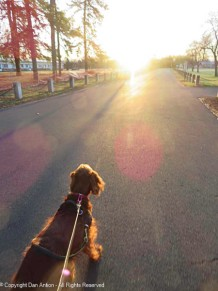 Maddie decided we needed to walk toward the light.