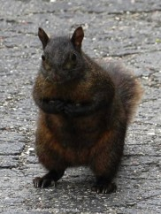 I think Smokey has been hanging around with Arnold. He looks like he wants a peanut.