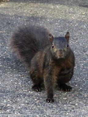 """As Maddie and I returned, Smokey was there to collect a toll. """"One peanut please,"""""""