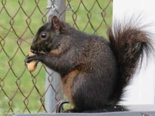See, I did give him a peanut.