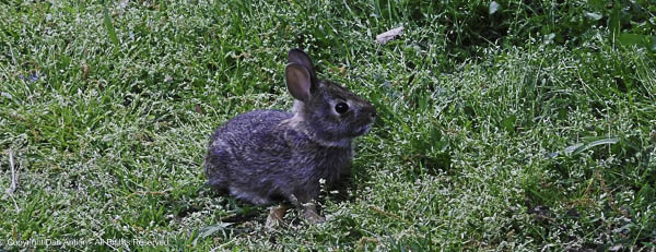 First baby bunny of 2021 - Photo by the Editor.