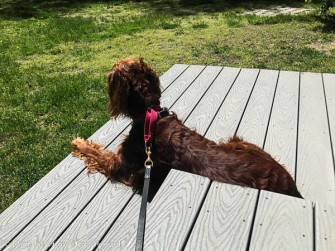 """People are working in the yard behind us. Maddie isn't happy. We had to sit on her """"backup"""" steps."""
