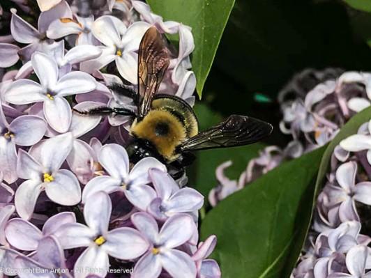 The first bee sightings in our yard began last week.