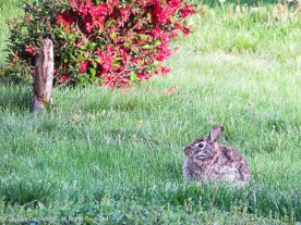 Even close up, our bunny blends in.