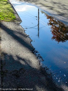 We have had a lot of rain lately, so my puddle is back.
