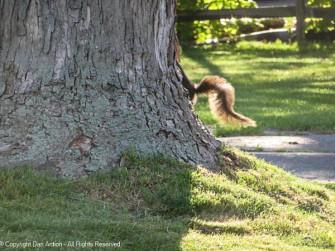 Smokey ran behind the tree.