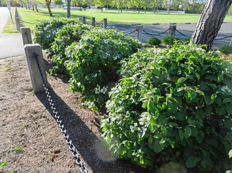 I'm not sure what these bushes are, but they are a nice welcome to the park.