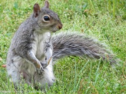 Portrait of a weary mom squirrel.