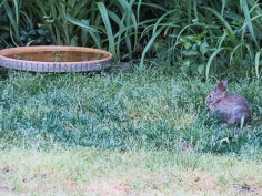 I included the birdbath to give some scale for the bunny.