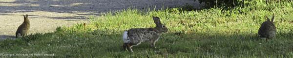 Bunny, bunny and baby bunny.