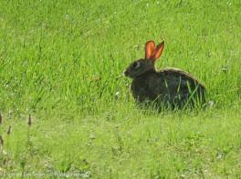 Good morning bunny.