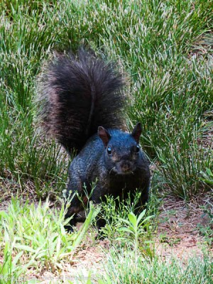 """""""I'll pose for you in exchange for a peanut. You know you want to take my picture."""""""