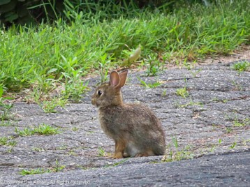 This little guy was waiting for us as we returned from our walk.