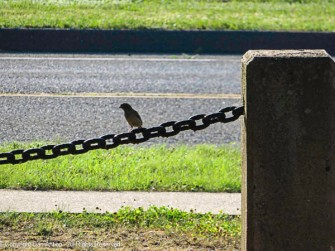 Birdy bird.