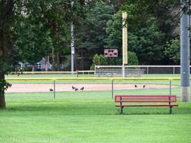 """""""We have to try an infield shift. These little guys are getting on base too easily."""""""