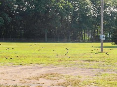 """""""Come on guys, the crows are here. We need to get some practice in."""""""