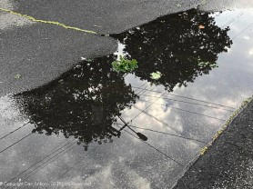 We don't often see the puddle at the end of our driveway.