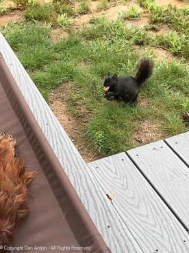 Smokey didn't seem to mind the wet grass.