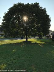 My season indicating tree.